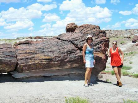 petrified forest arizona etats-unis voyage aux usa en famille