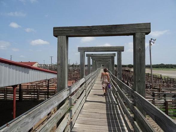 Un corral à Fort Worth une balade pendant un voyage en Amérique en famille