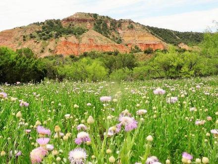 Le Lighthouse Trail et ses American basketflowers au Texas pendant un voyage aux USA en famille