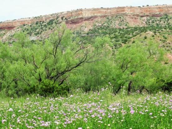 Le Sunflower Trail ombragé et fleuri à voir au Texas en voyage aux Etats-Unis en famille