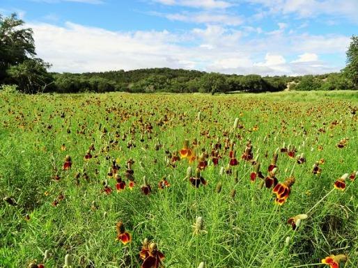 Les fleurs au Texas à voir pendant un voyage en Amérique en famille
