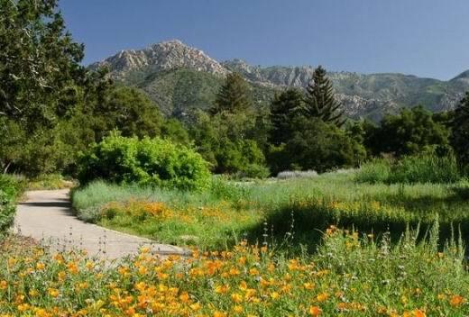 Boctanic Garden de Santa Barbara en californie aux USA à visiter lors d'un voyage aux Etats-Unis en famille
