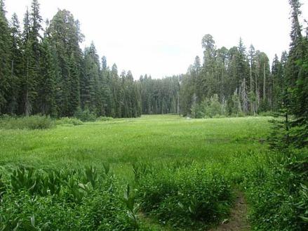 Le Crescent Meadows de sequoia national park en californie aux USA à visiter lors d'un voyage aux etats-unis en famille