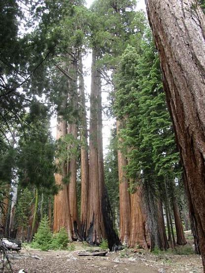 Big Trees Trailhead à sequoia national park californie voyage aux usa en famille