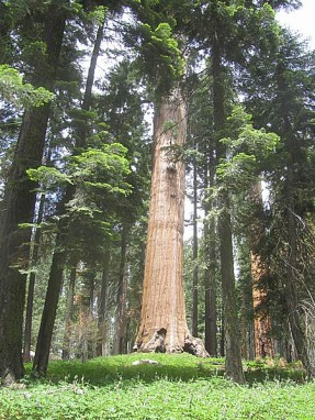 congres trial sequoia national park californie voyage aux usa en famille