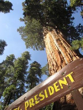 le président sur congres trial sequoia national park californie voyage aux usa en famille