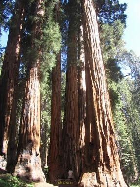 le sénat sur congres trial sequoia national park californie voyage aux usa en famille