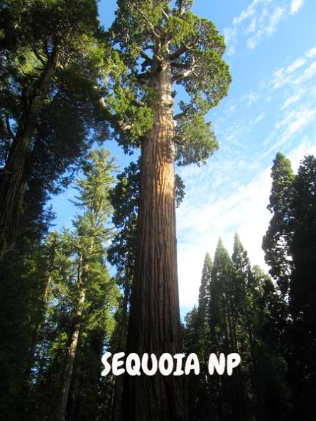 Sequoia national park californie voyage aux usa en famille