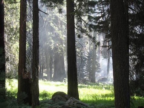 sequoia national park californie voyage aux usa en famille