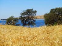 Millerton lake state park californie voyage aux usa en famille