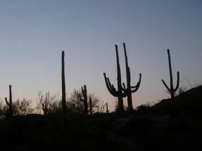 tucson arizona etats-unis voyage aux usa en famille